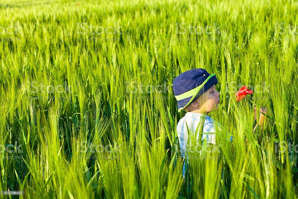 Boy in green barley field stock photo