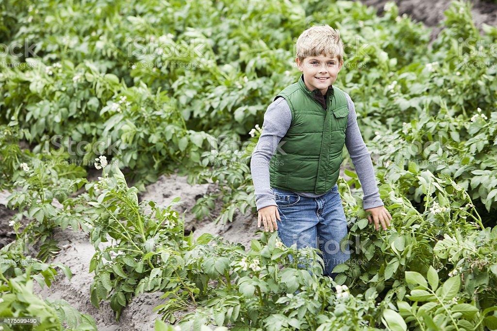 Boy in potato field stock photo