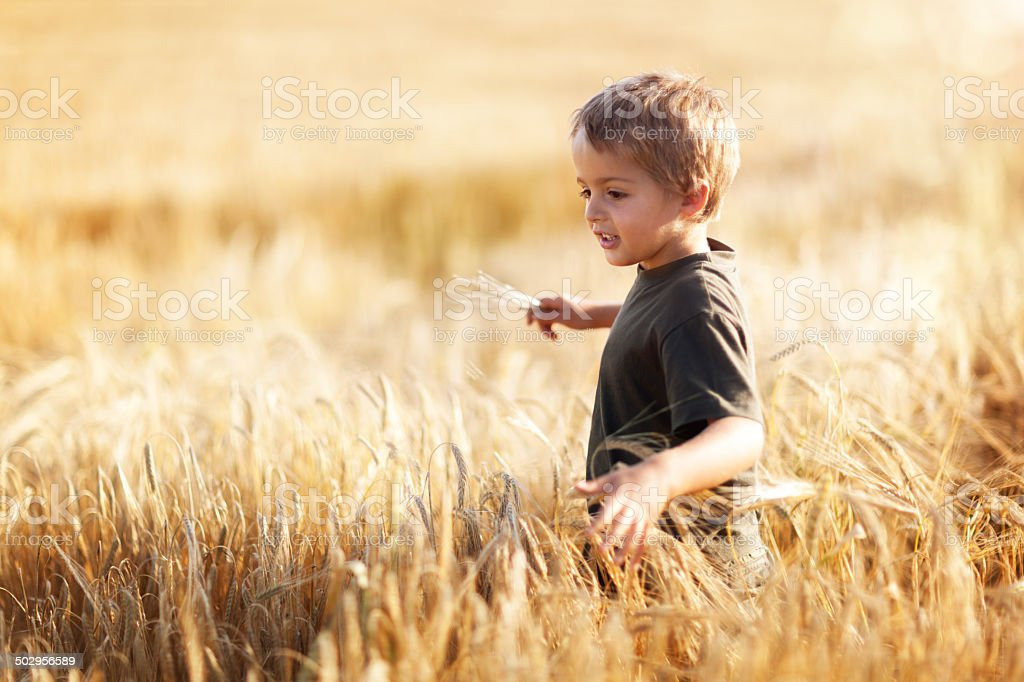 Boy in wheat field stock photo