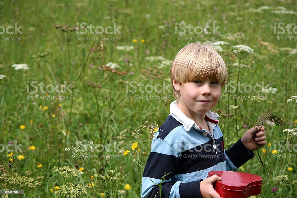 Boy in wildflowers royalty-free stock photo