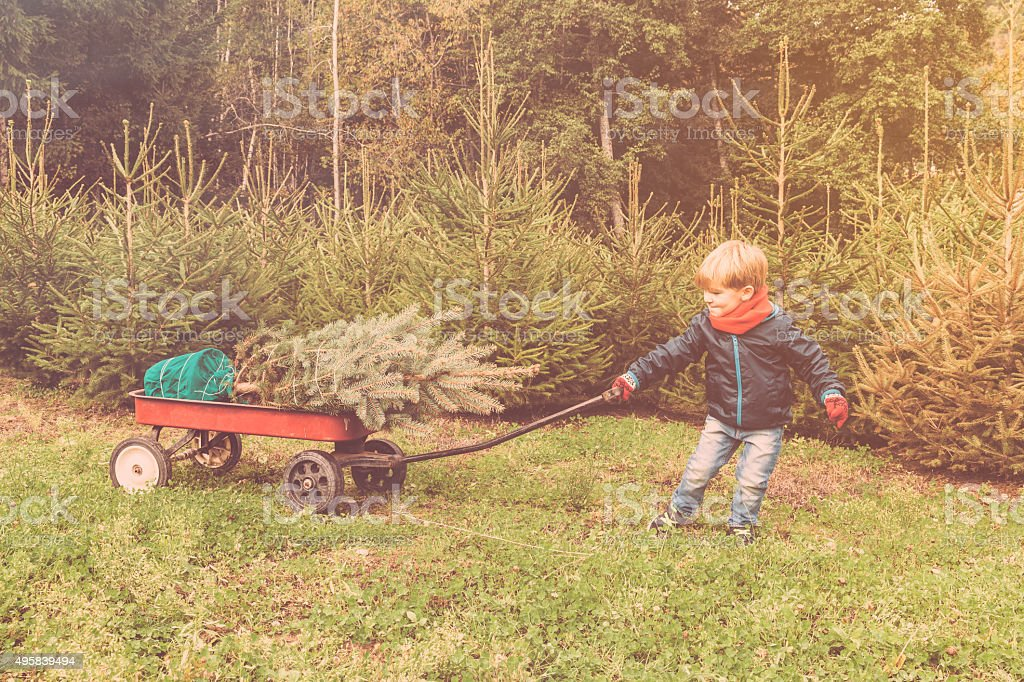 Boy is pulling a cart with his new christmas tree stock photo
