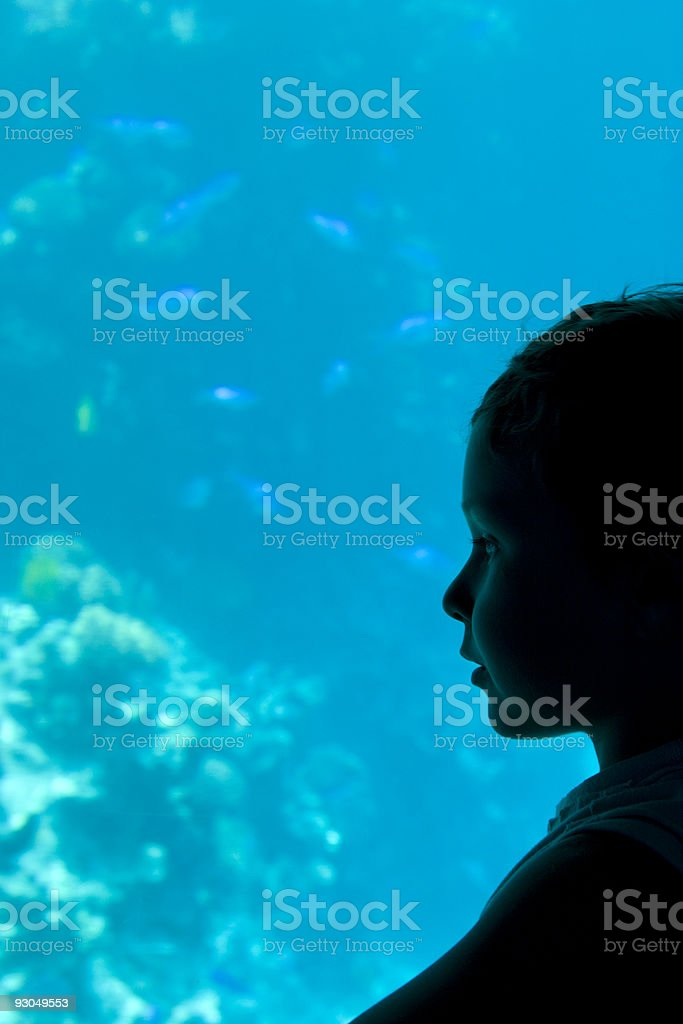 Boy looking at coral fishes from boat with glass bottom stock photo
