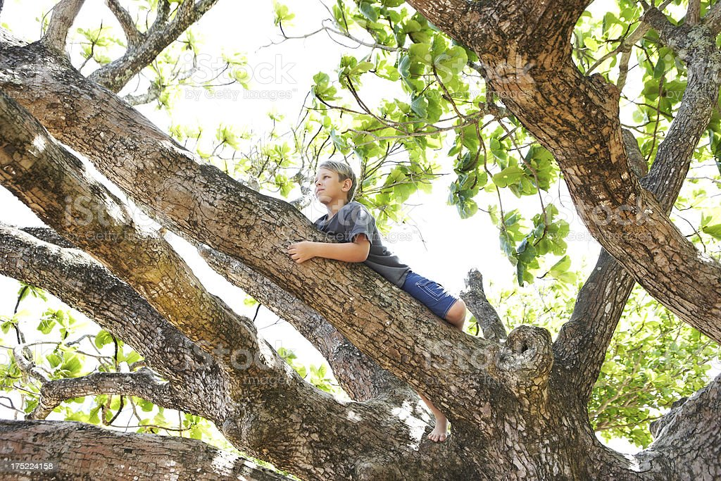 Boy lying down on a tree branch stock photo