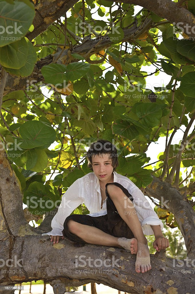Boy on the tree royalty-free stock photo