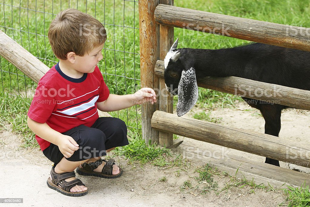 Boy Petting Goat royalty-free stock photo
