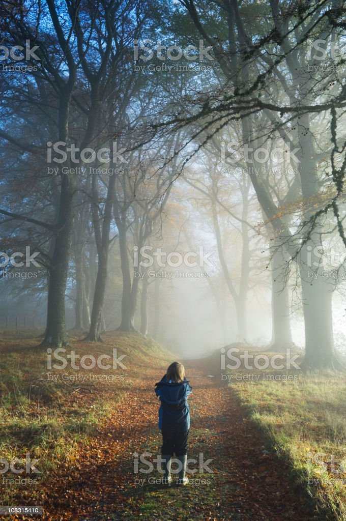Boy photographing misty trees royalty-free stock photo