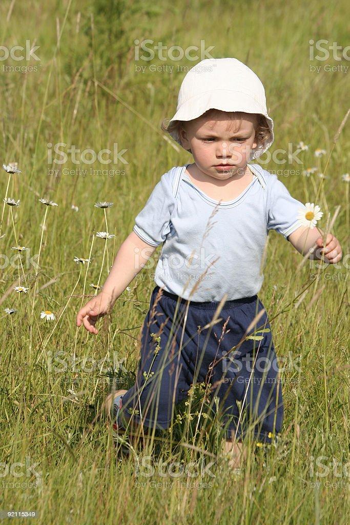 Boy picking a daisy stock photo