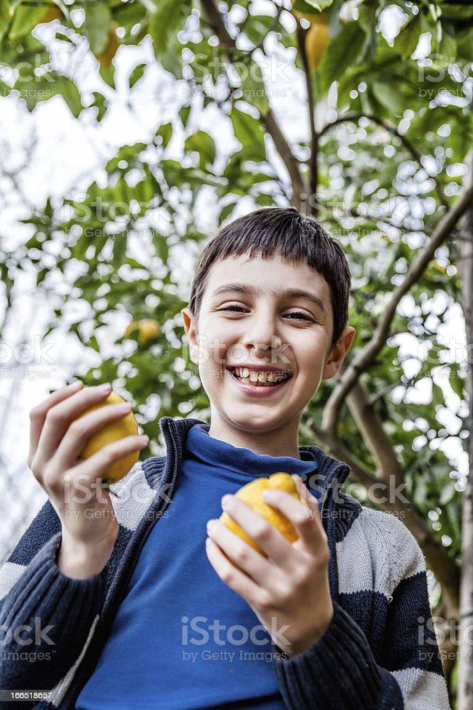 Boy Picking Lemons royalty-free stock photo