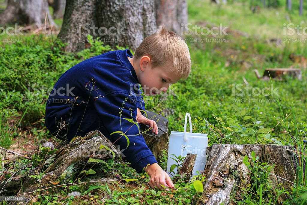 Boy picking up fruits of the forest royalty-free stock photo