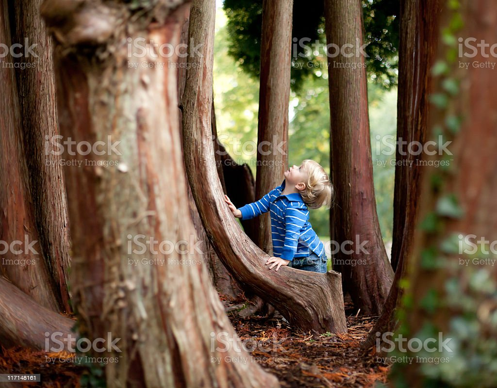 Boy playing in the woods and leaning on a tree royalty-free stock photo