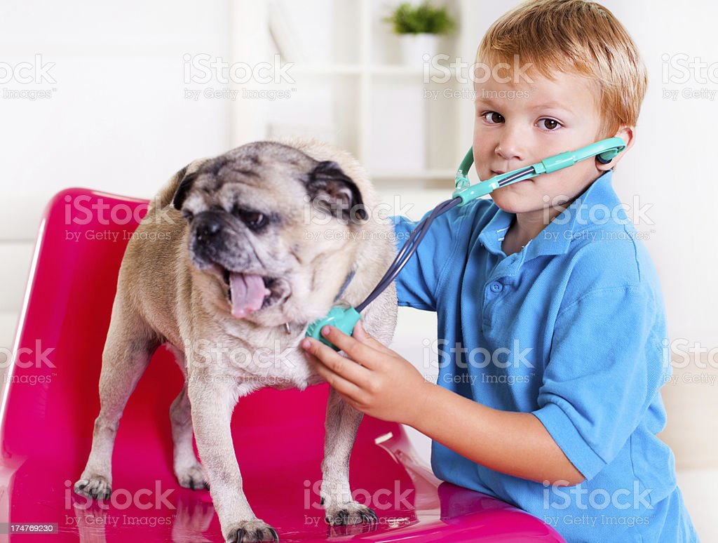Boy playing with his dog stock photo