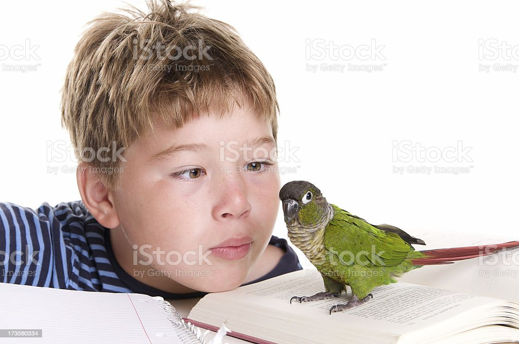 Boy Playing With Pet Bird While Doing Homework stock photo