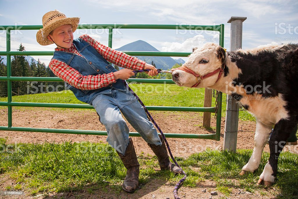 Boy pulling cow stock photo