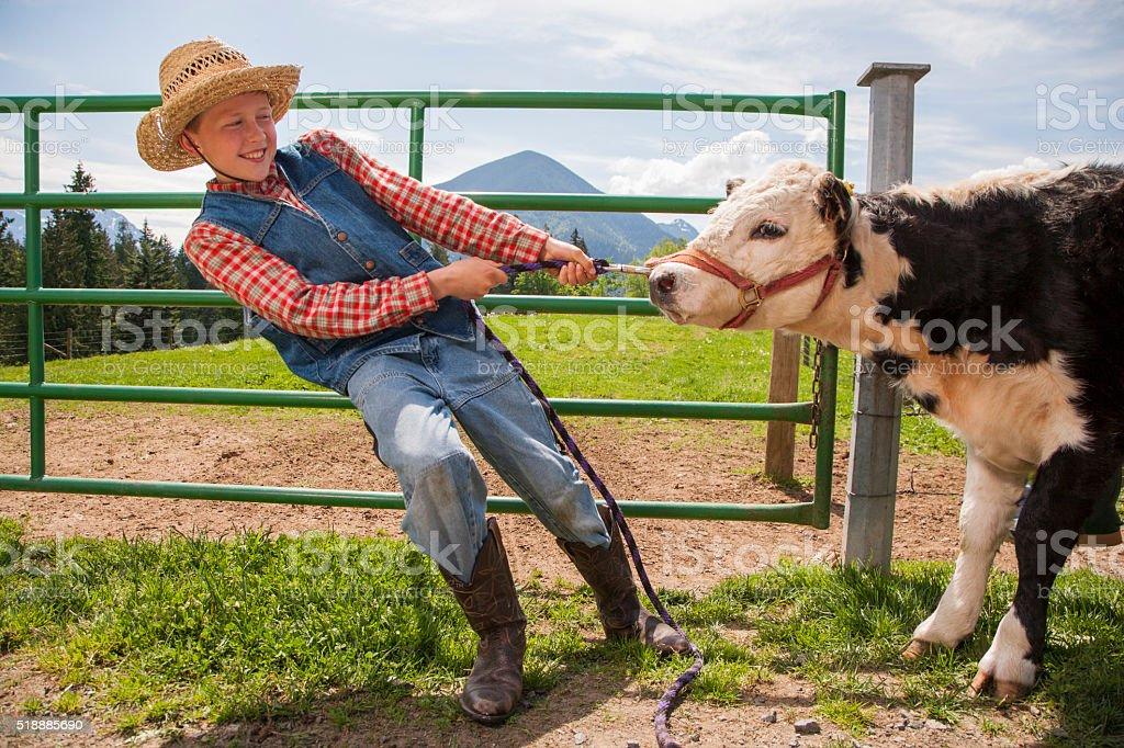 Boy pulling cow stock photo