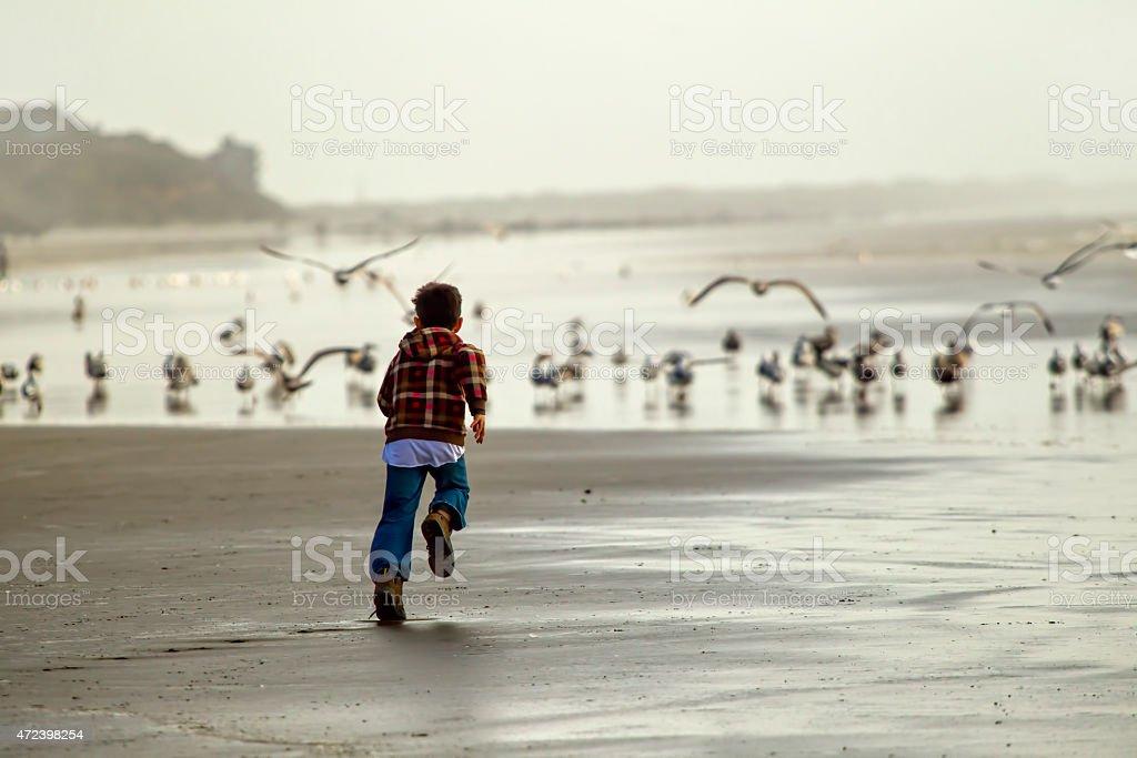 Boy runs toward seagulls. stock photo