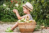 Boy sitting near basket with apples