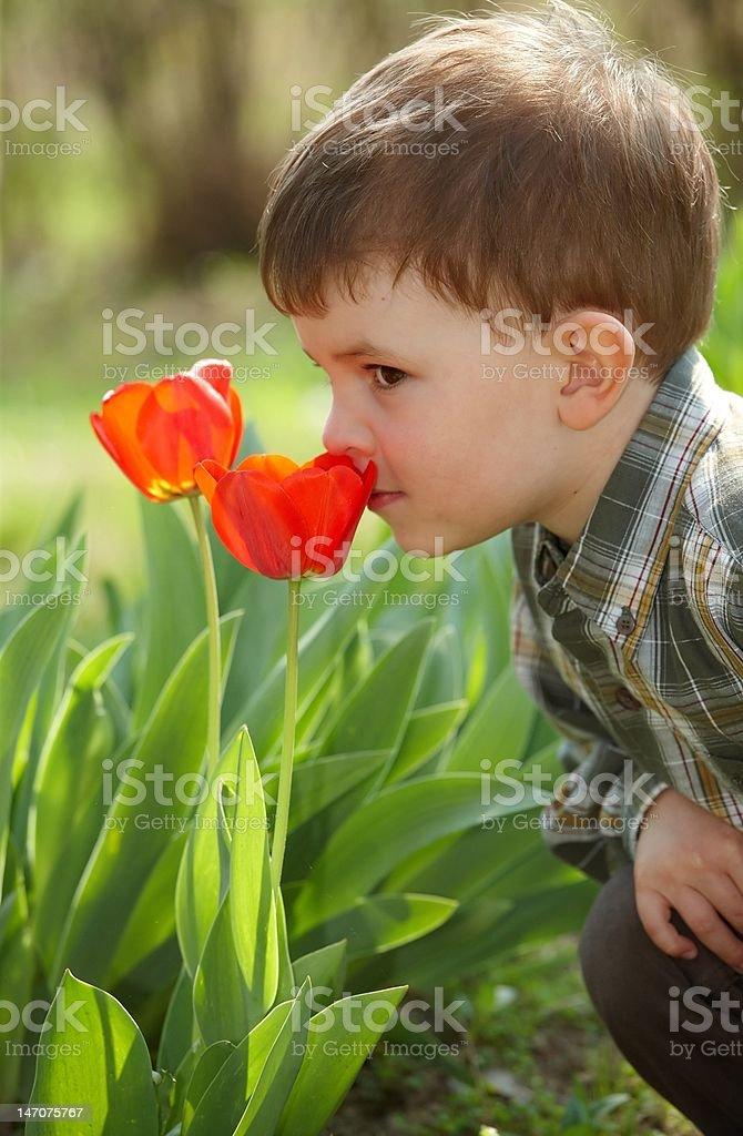 Boy smelling tulip royalty-free stock photo
