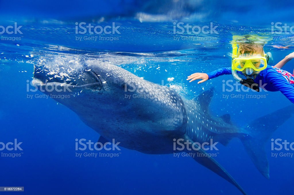 Boy snorkeling with whale shark stock photo