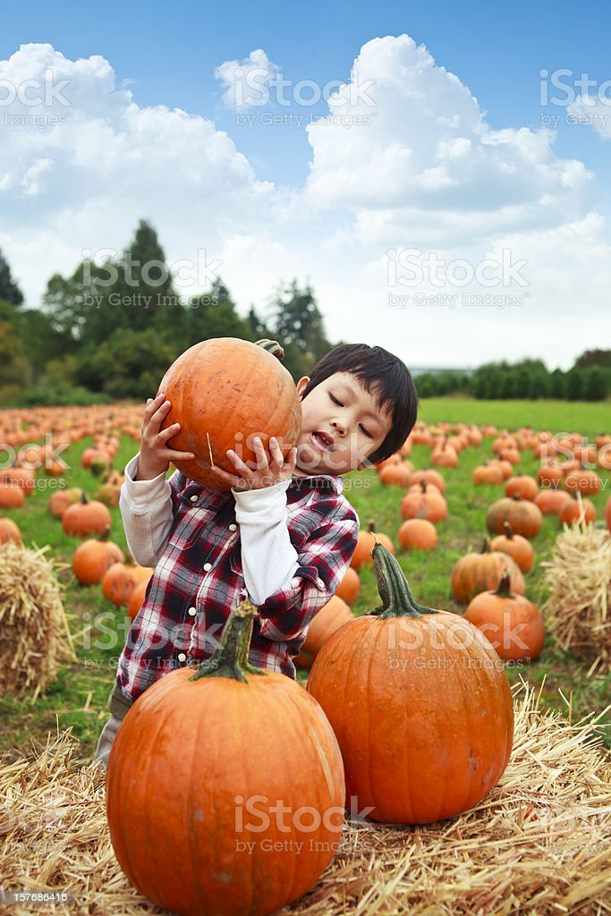 Boy Stacking Pumpkins stock photo