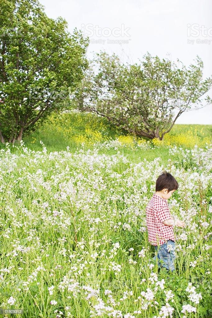 Boy standing in an overgrown field stock photo