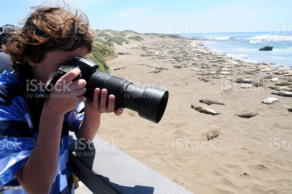 Boy taking pictures of Elephant Seals in Piedras Blancas stock photo