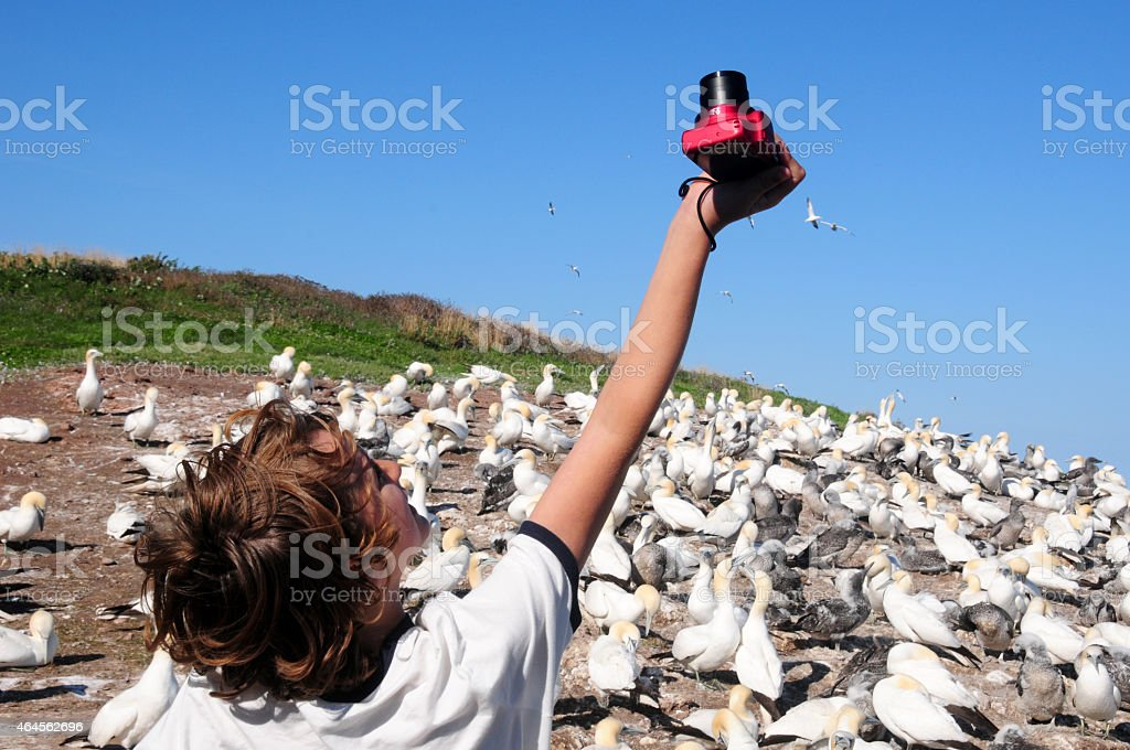 Boy taking pictures of Northern Gannets in, Quebec, Canada stock photo