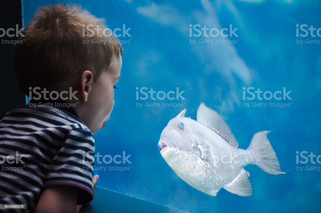 Boy talking with a fish in an aquarium. stock photo