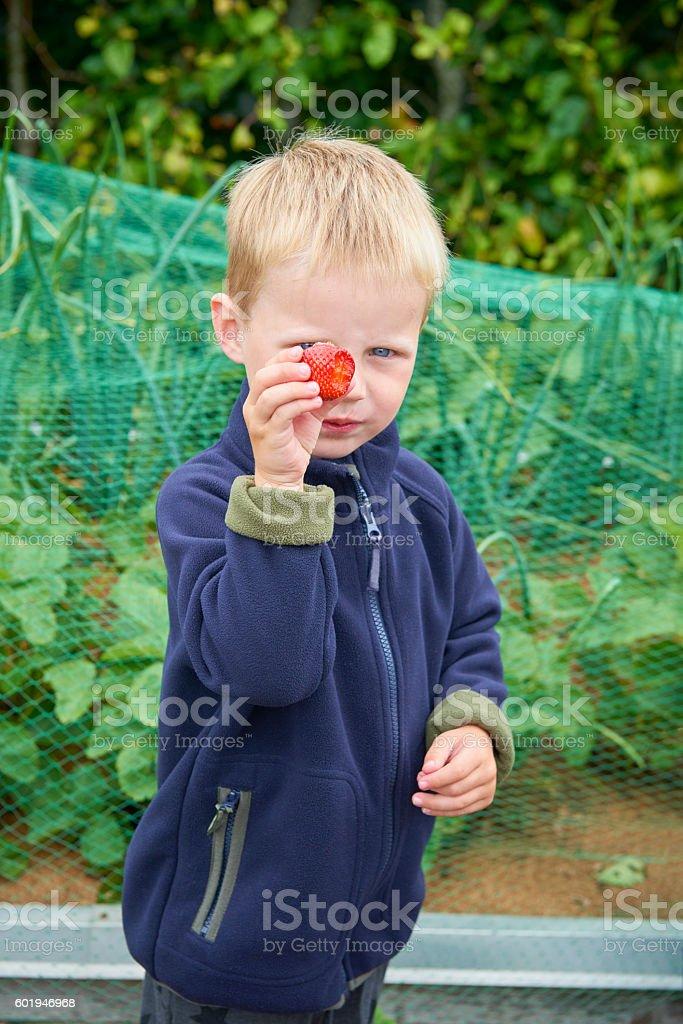 Boy tasting a strawberry stock photo