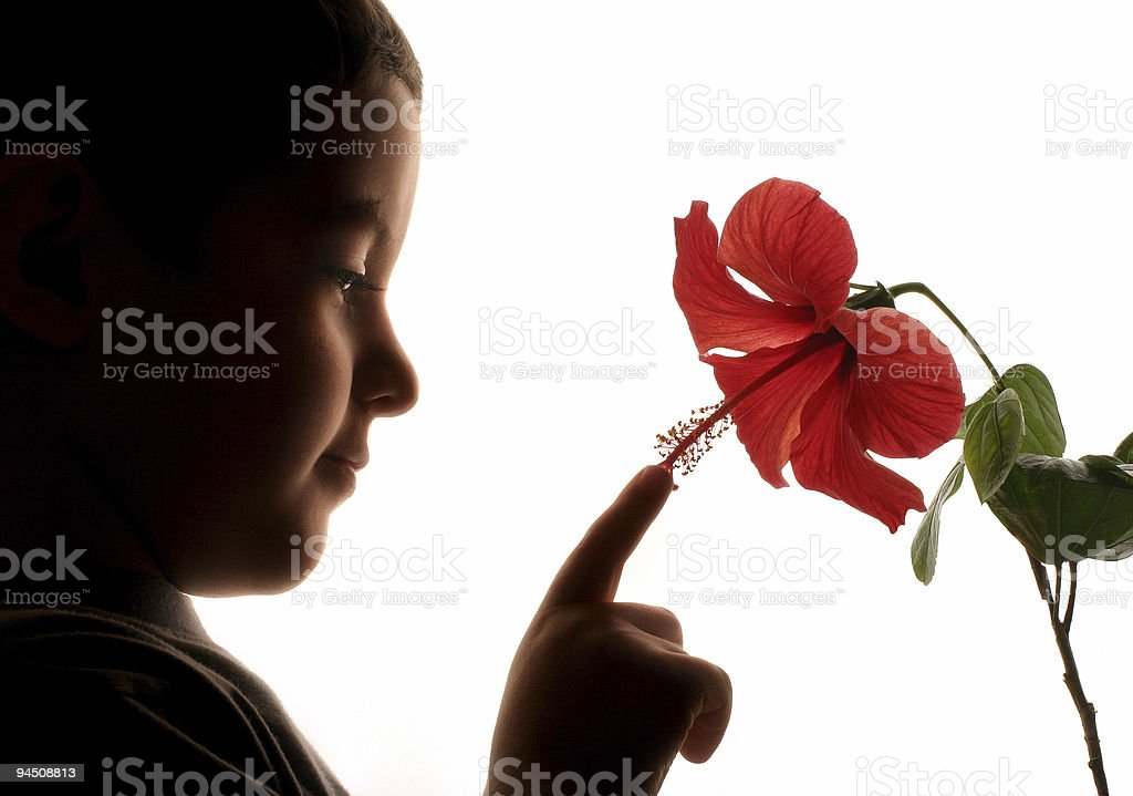 Boy touching a red flower royalty-free stock photo