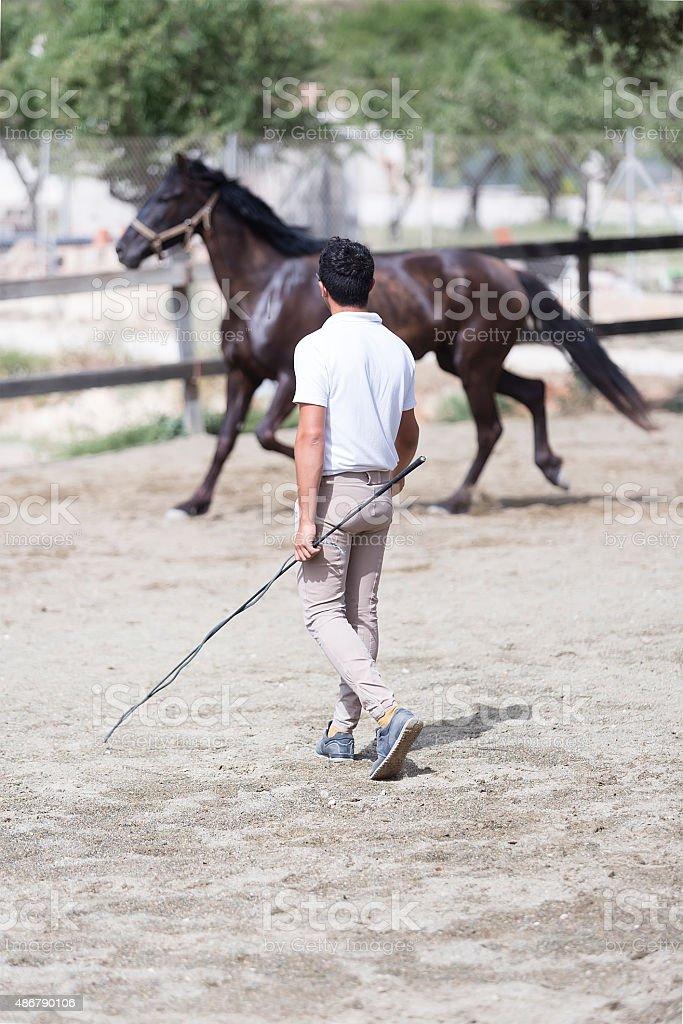 boy training horse stock photo
