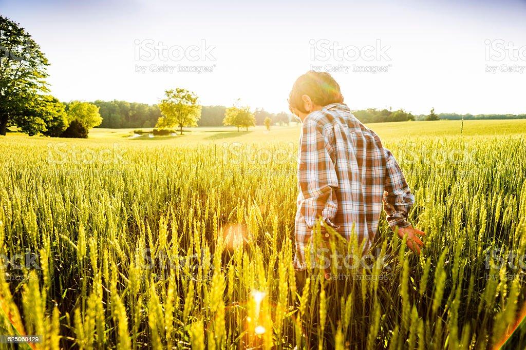Boy walking in a wheat field in evening light stock photo