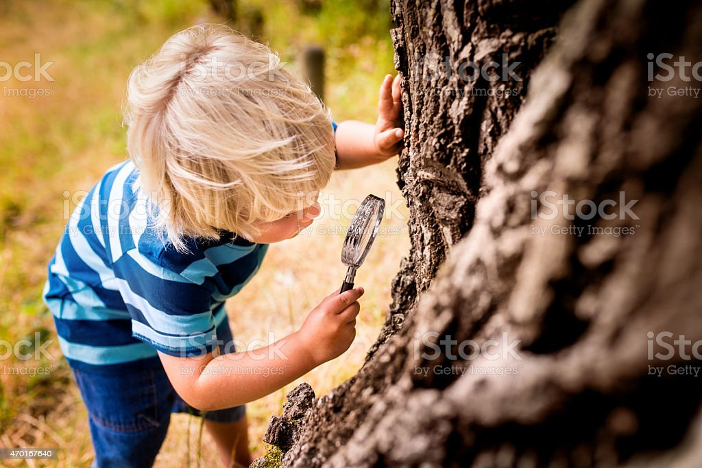Boy with a magnifying glass studying a tree's trunk stock photo
