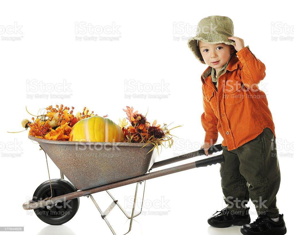 Boy with a pumpkin in a wheelbarrow stock photo