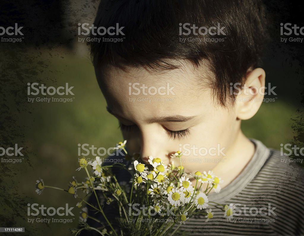 Boy with Chamomile royalty-free stock photo