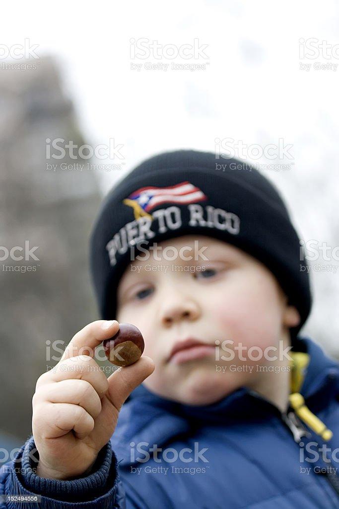 boy with chestnut stock photo