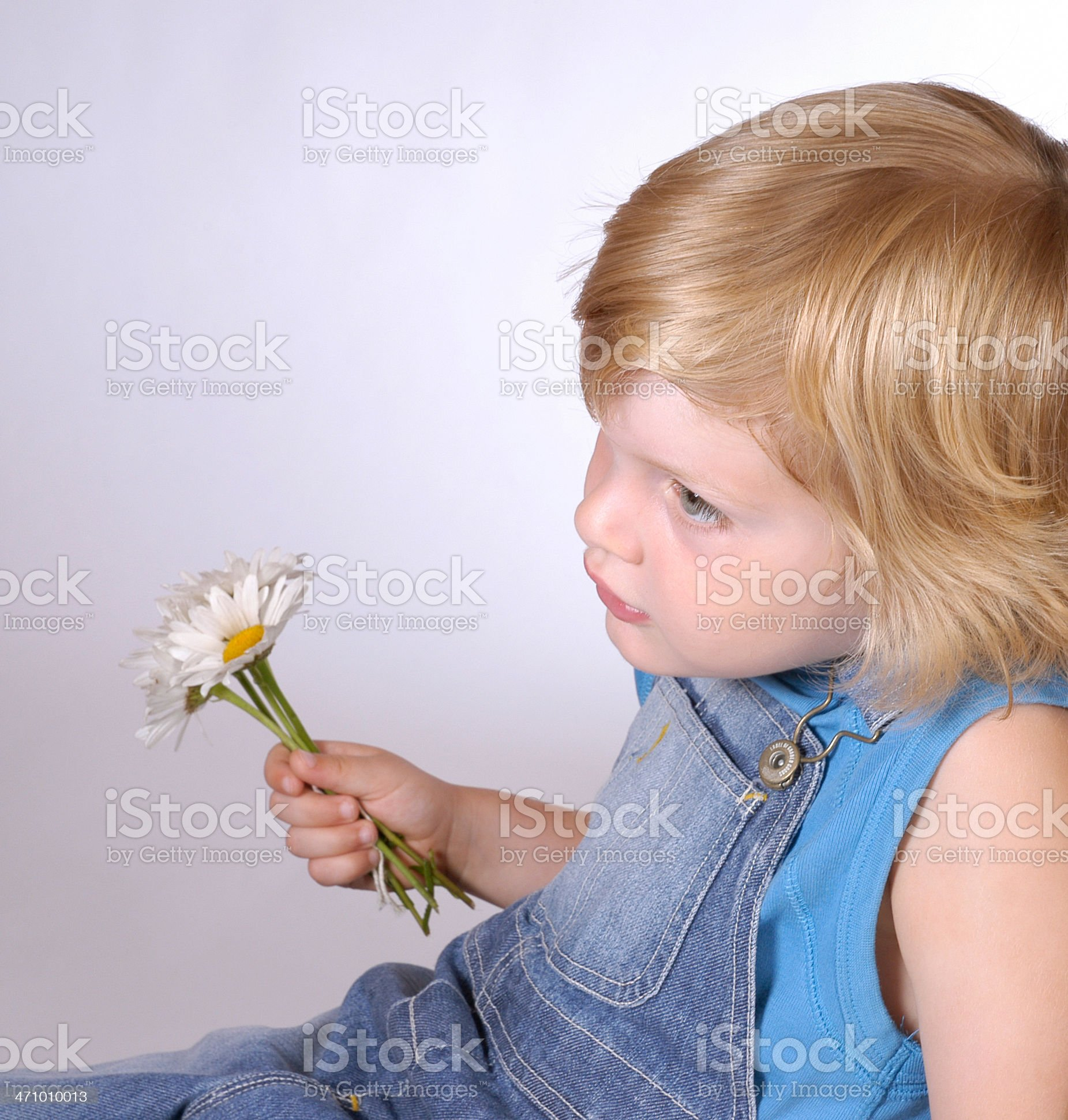 boy with daisies royalty-free stock photo