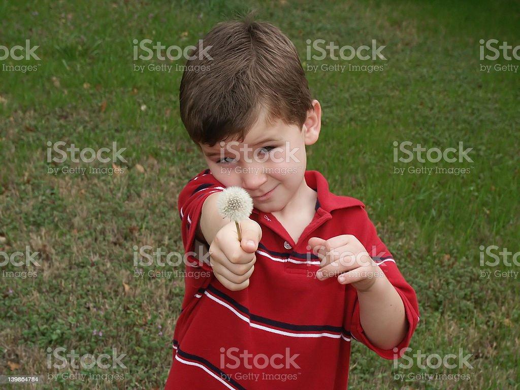 boy con flor foto de stock libre de derechos