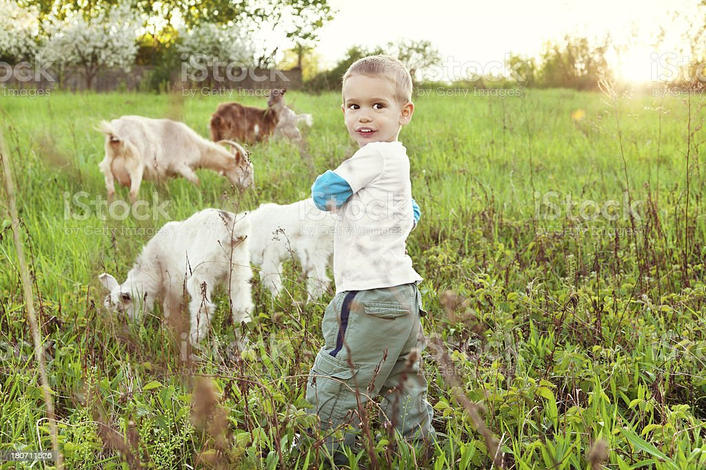 Boy with goats stock photo