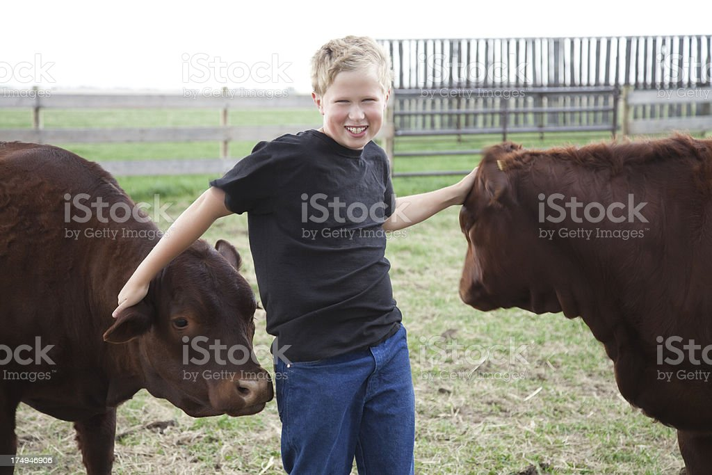 Boy with his 4-H Calves stock photo