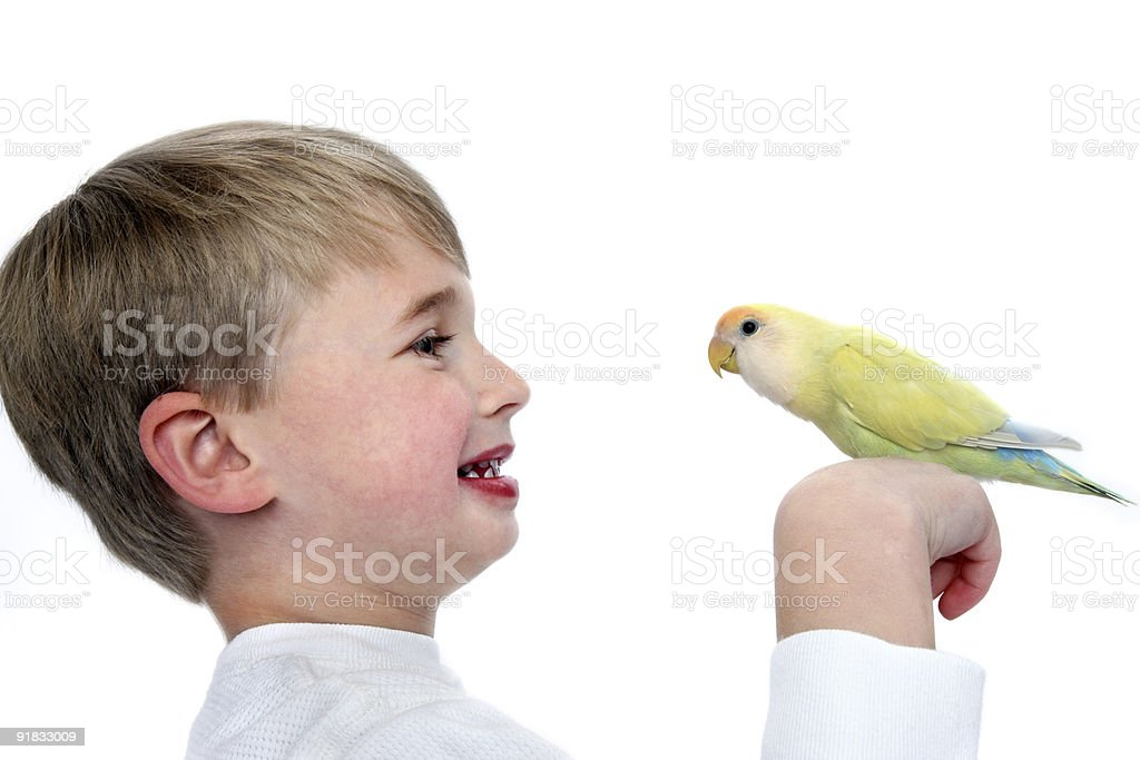 Boy with his bird royalty-free stock photo