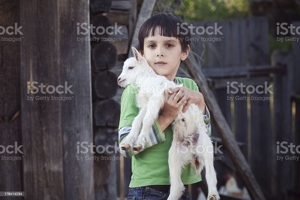 boy with little goat stock photo