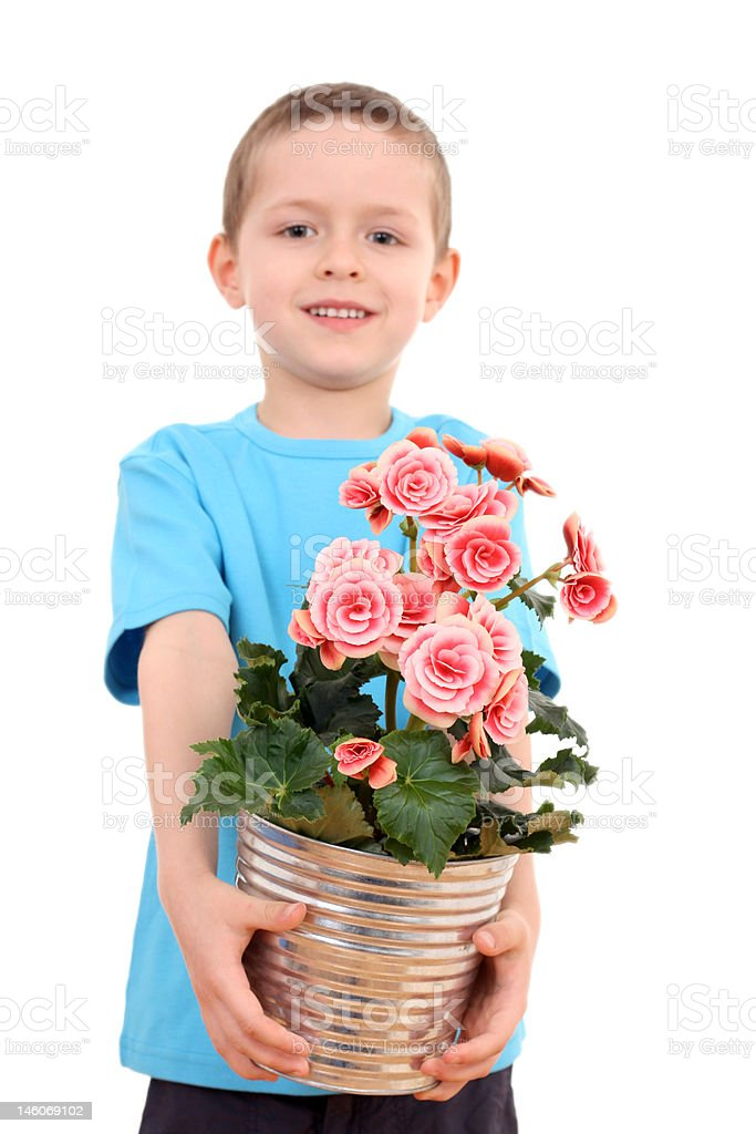 boy with potted flower royalty-free stock photo