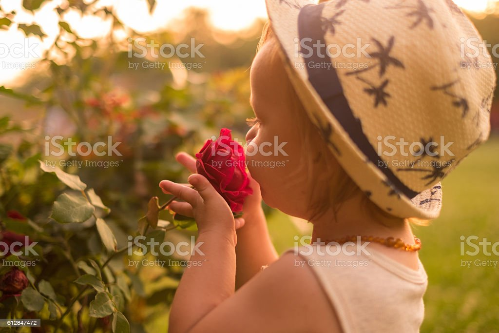 Boy with rose stock photo