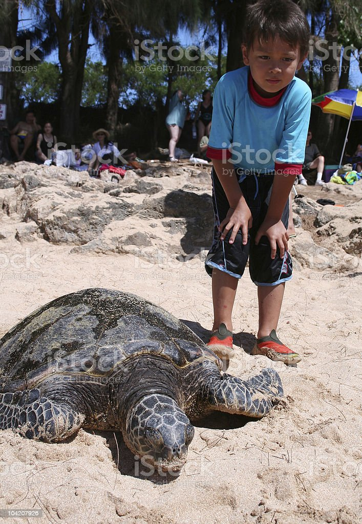 boy with sea-turtle stock photo