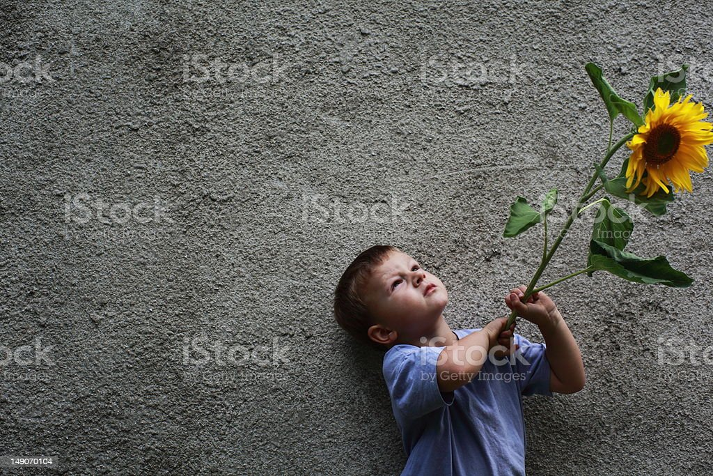 Boy with sunflower royalty-free stock photo