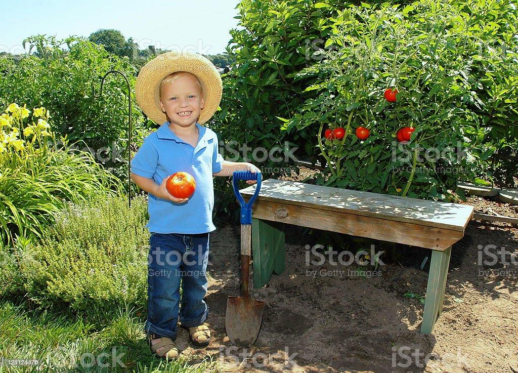 Boy with Tomato and Shovel royalty-free stock photo
