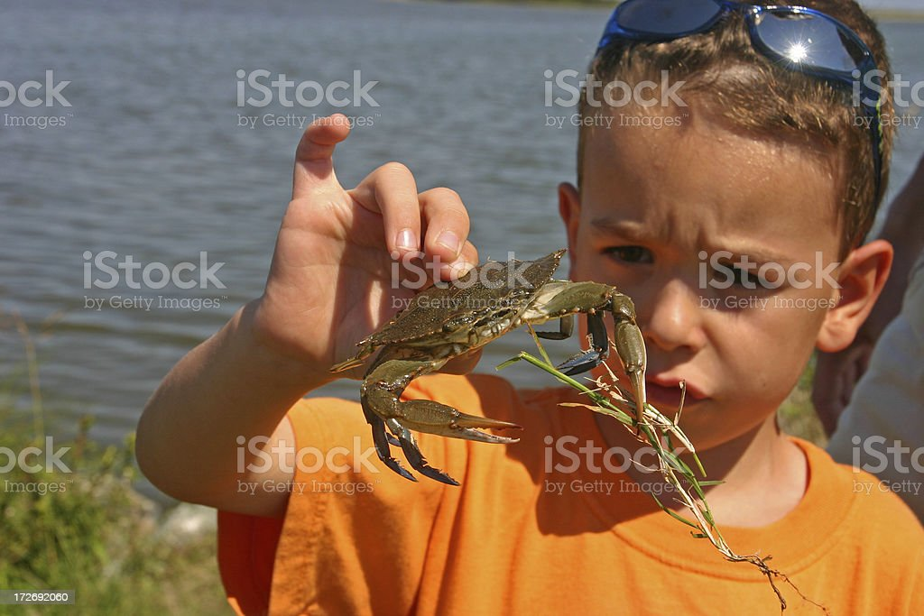 Boy/child looking at blue crab in his hand royalty-free stock photo