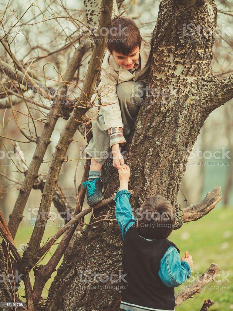 Boys climbing on tree stock photo