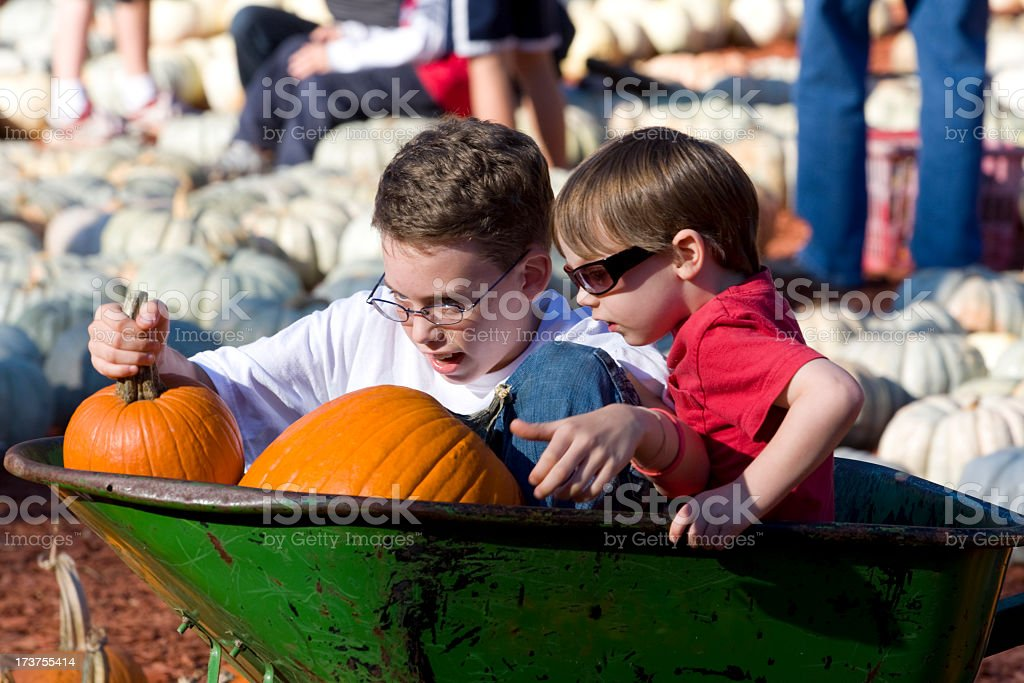Boys playing with pumpkins stock photo