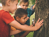 Boys studying a tree trunk with a magnifying glass